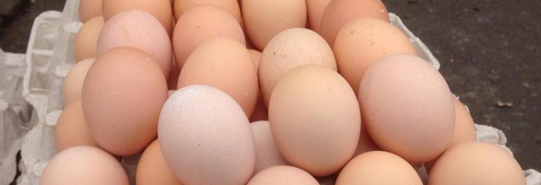 Jajka i nabiał bez chemii